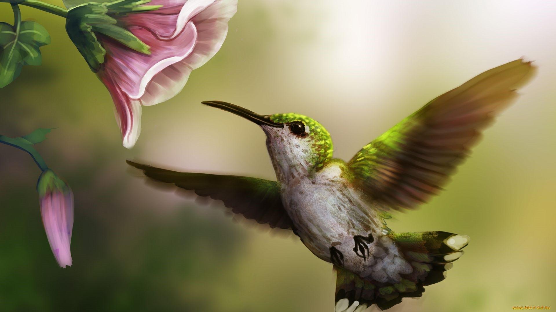 Hummingbird Wallpaper and Background