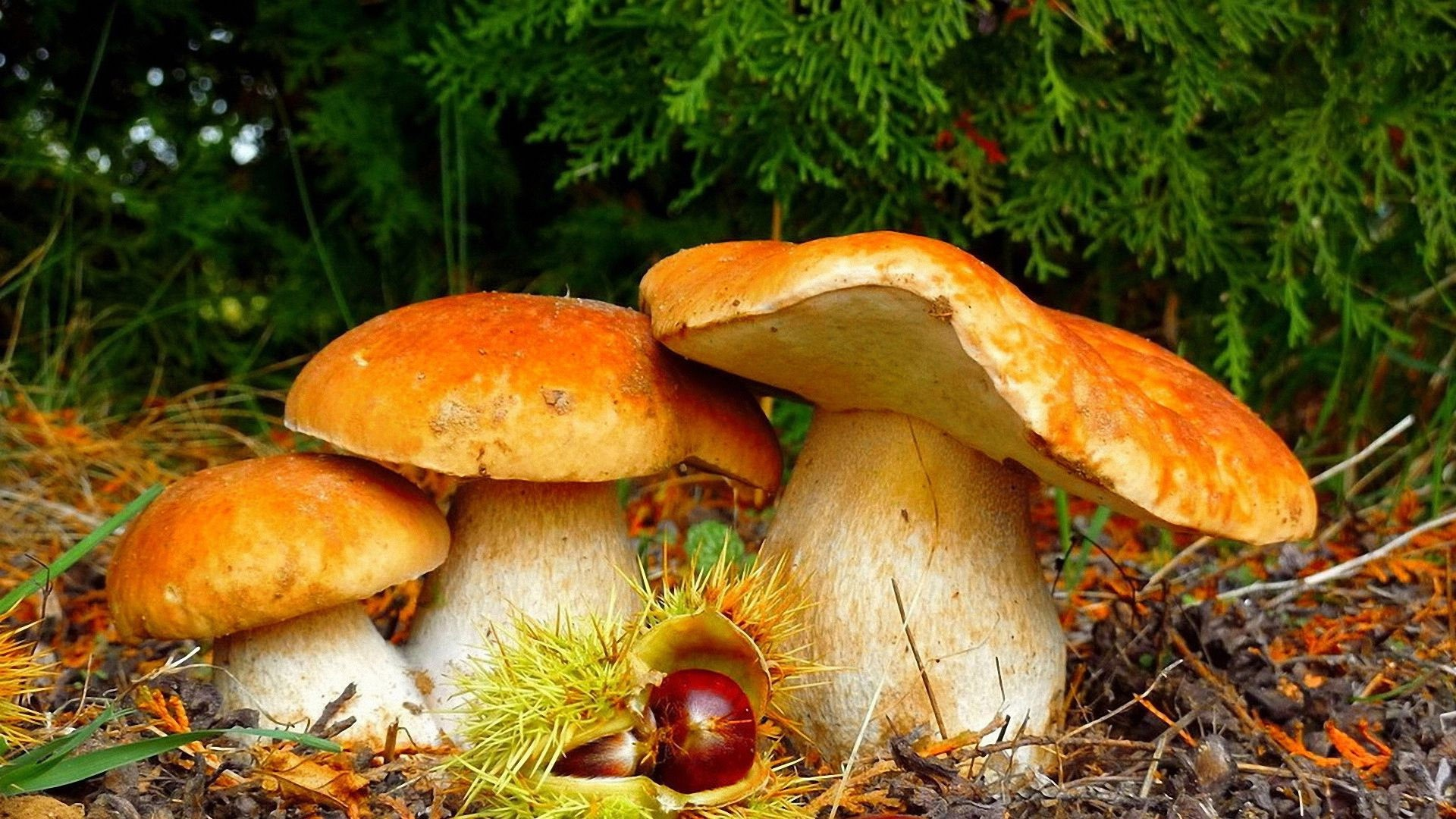 Mushroom Background Wallpaper
