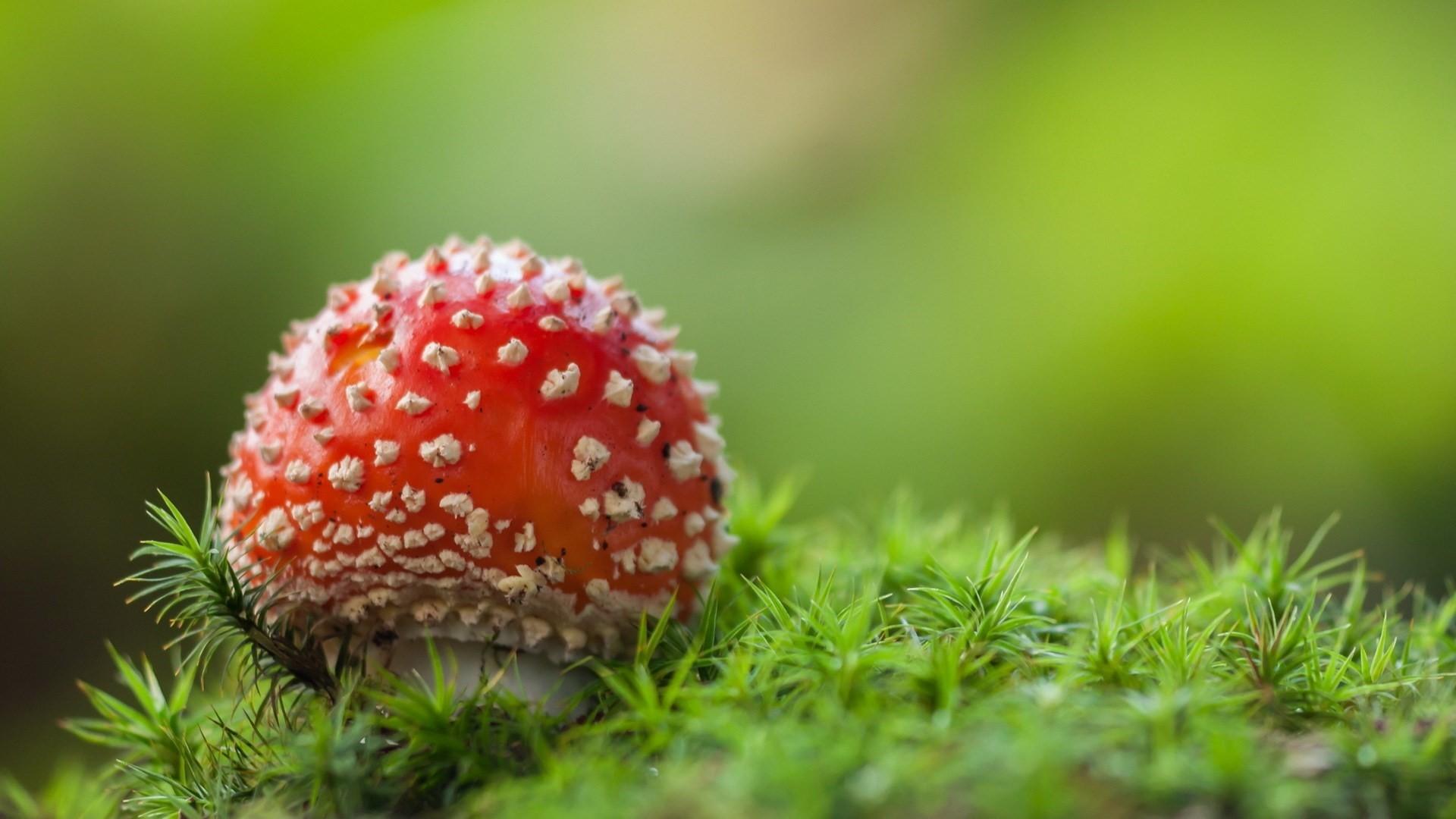 Mushroom Full HD Wallpaper
