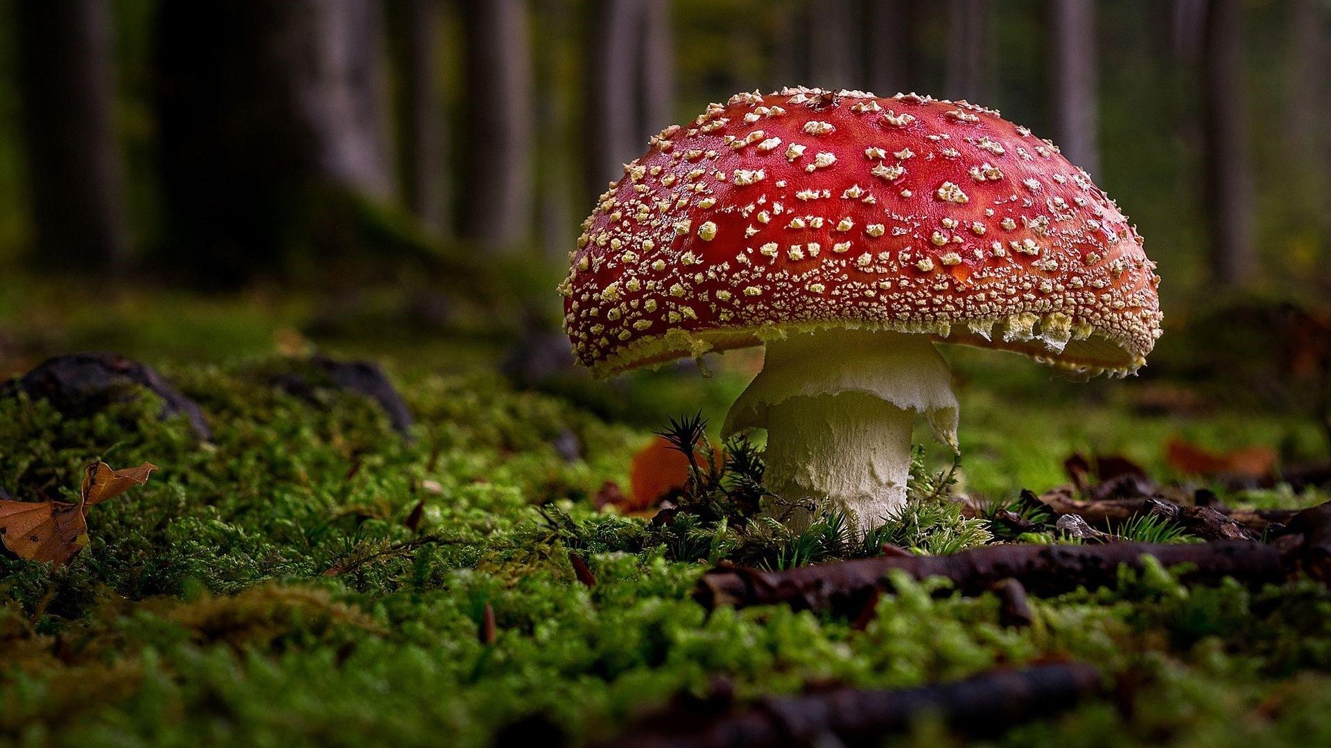 Mushroom computer wallpaper