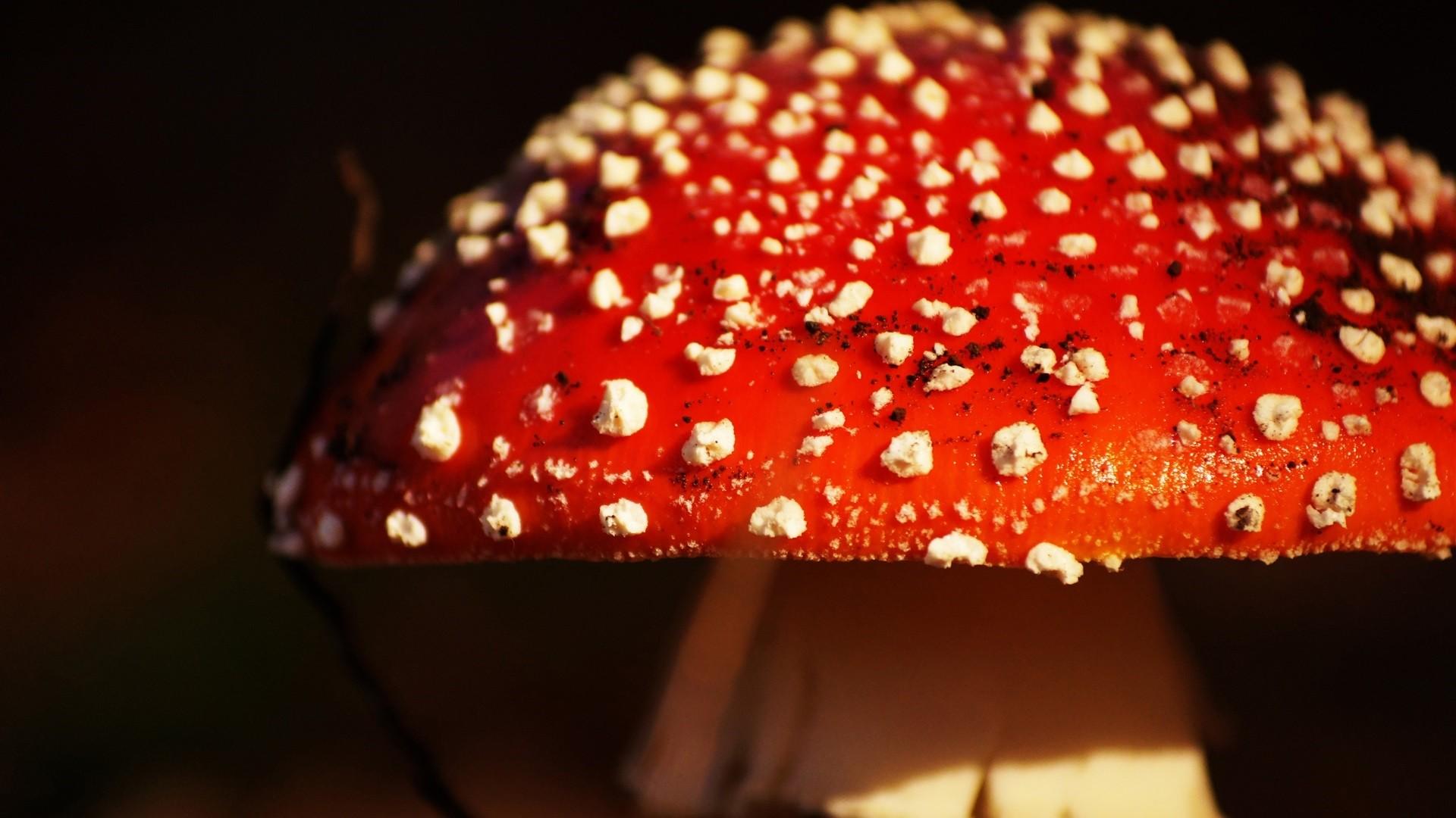 Mushroom Free Wallpaper