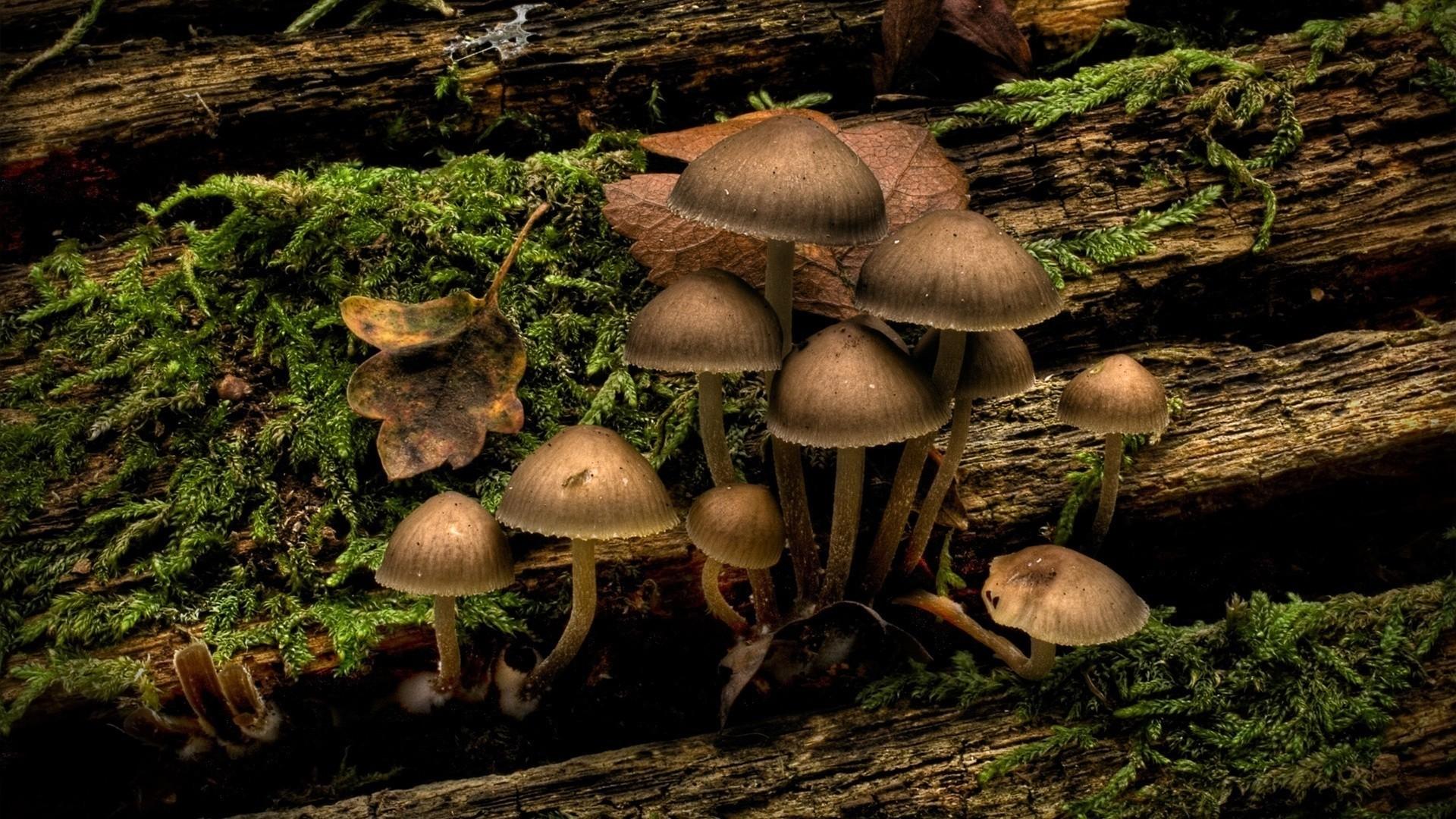 Mushroom Download Wallpaper