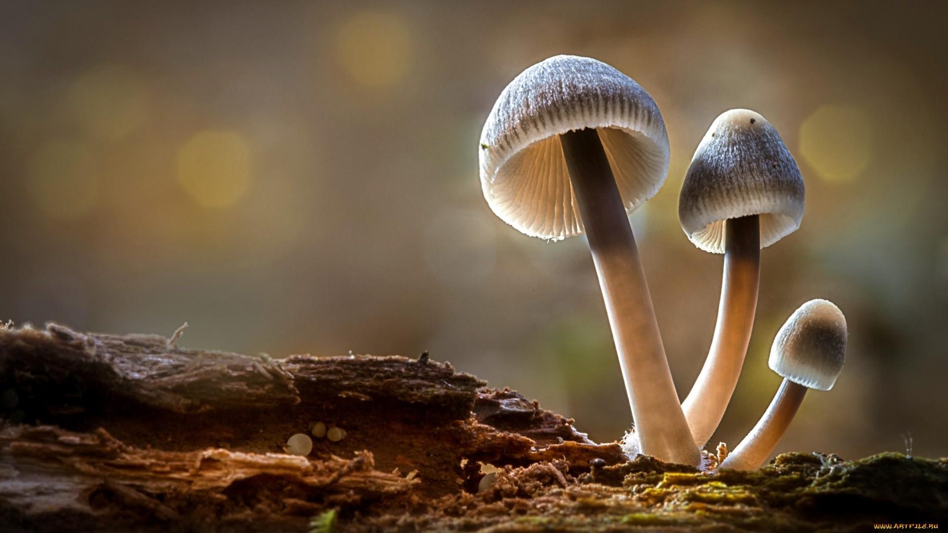 Mushroom Desktop Wallpaper
