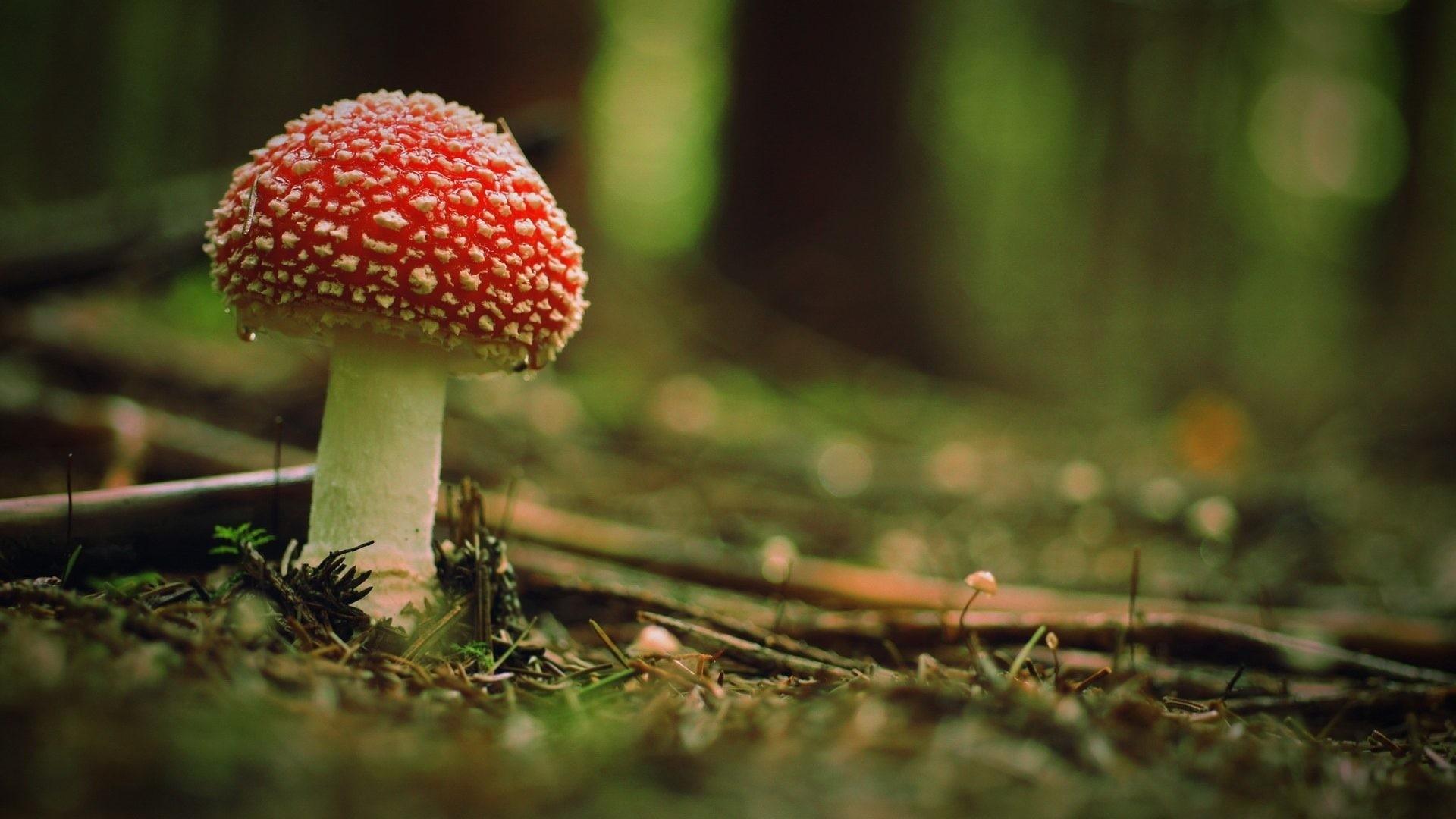Mushroom Background