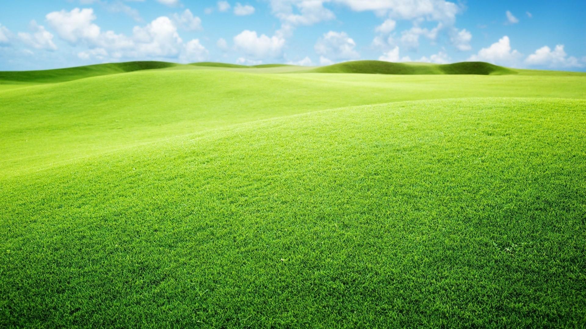 Seagrass Wallpaper image hd