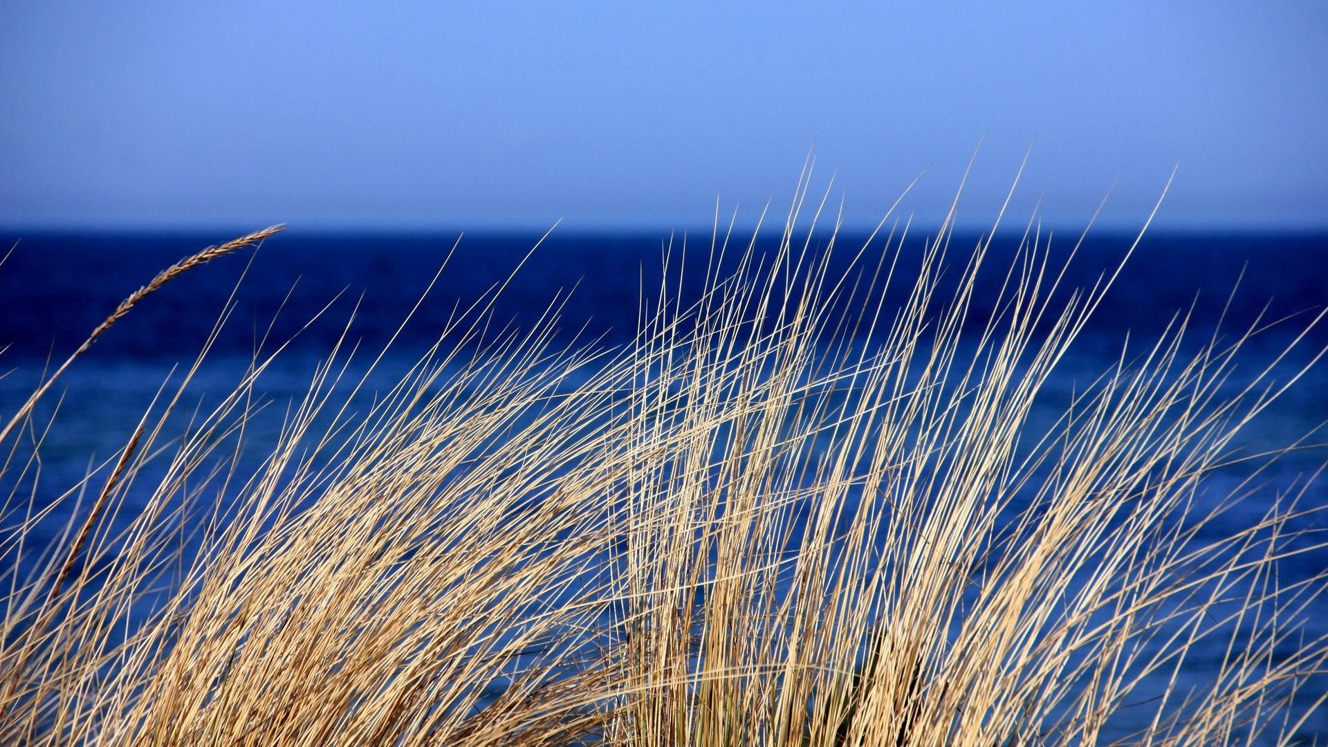 Seagrass Desktop wallpaper