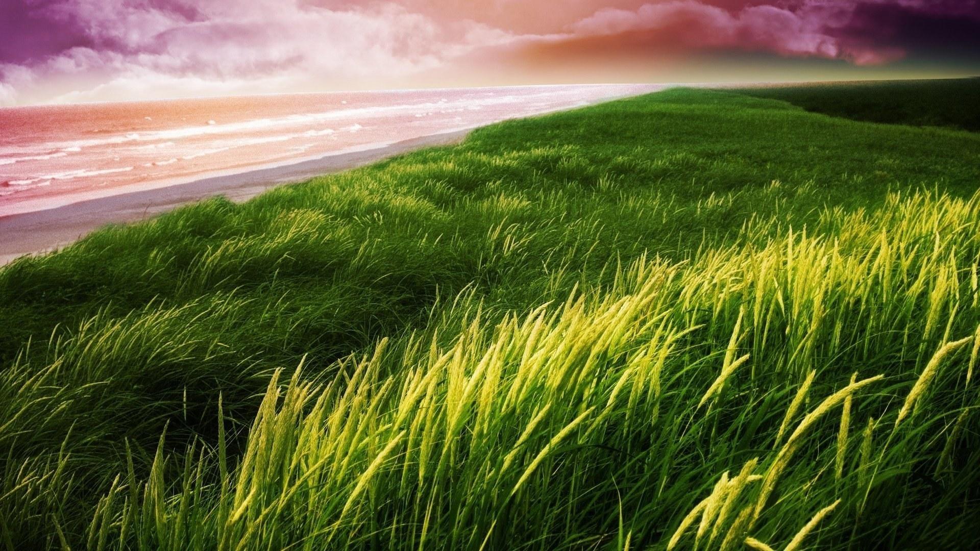 Seagrass Picture