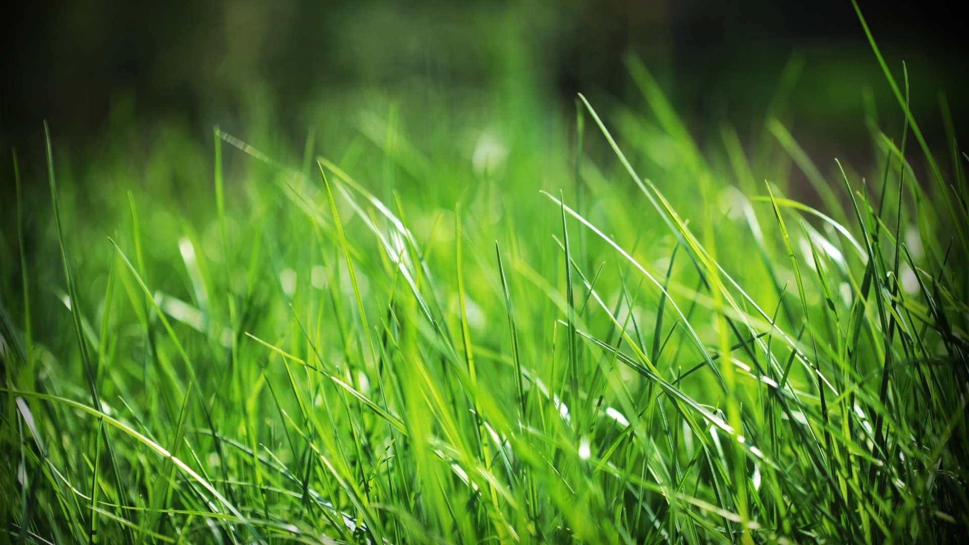 Seagrass HD Download