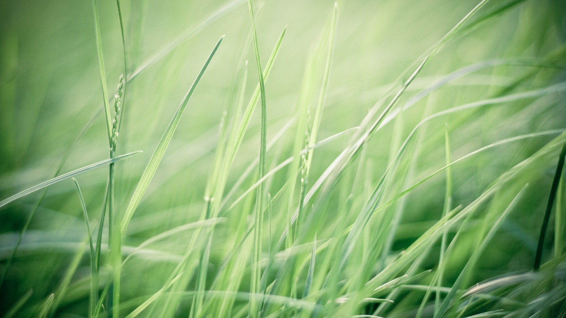 Seagrass hd wallpaper download