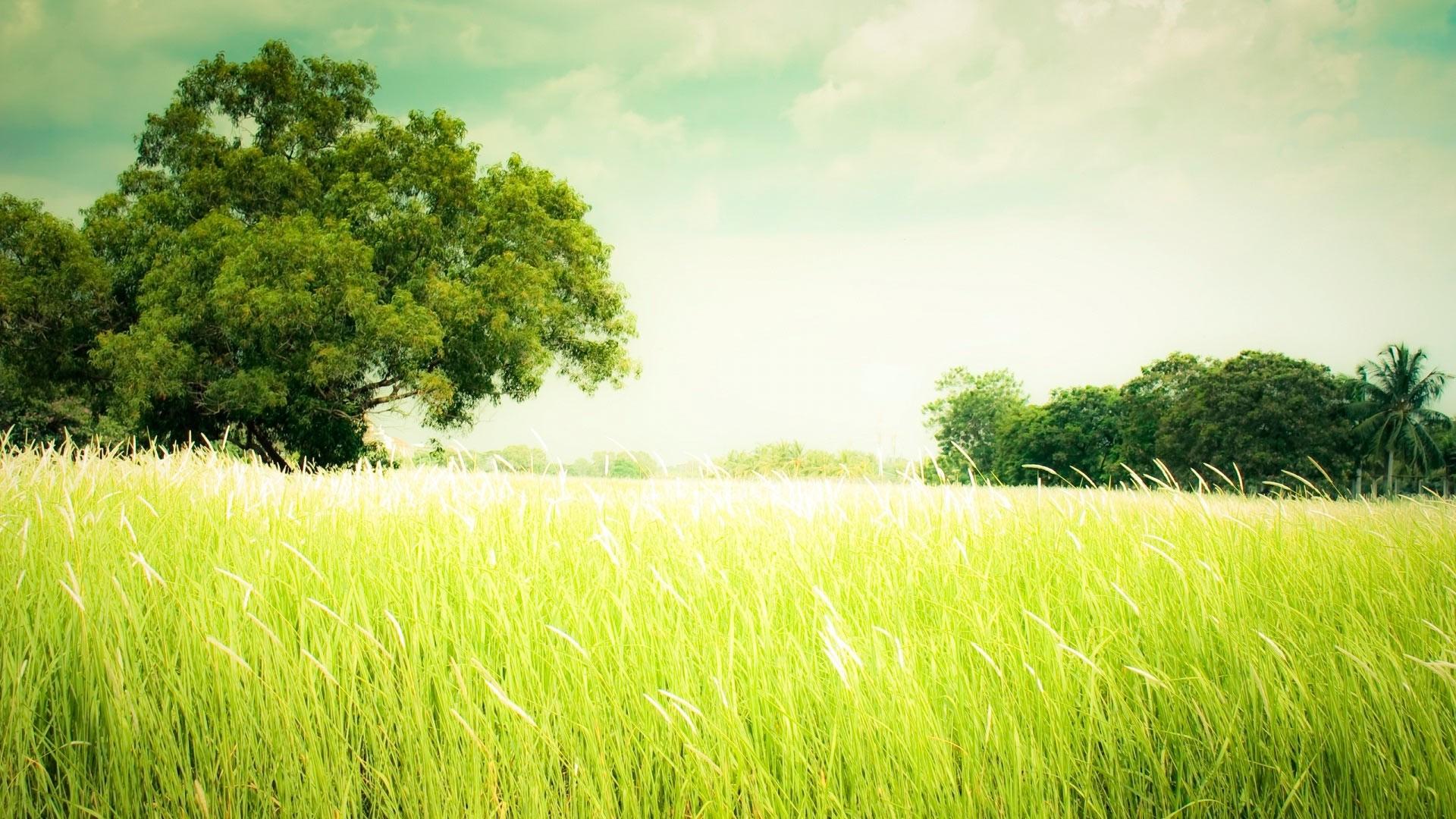 Seagrass Pic