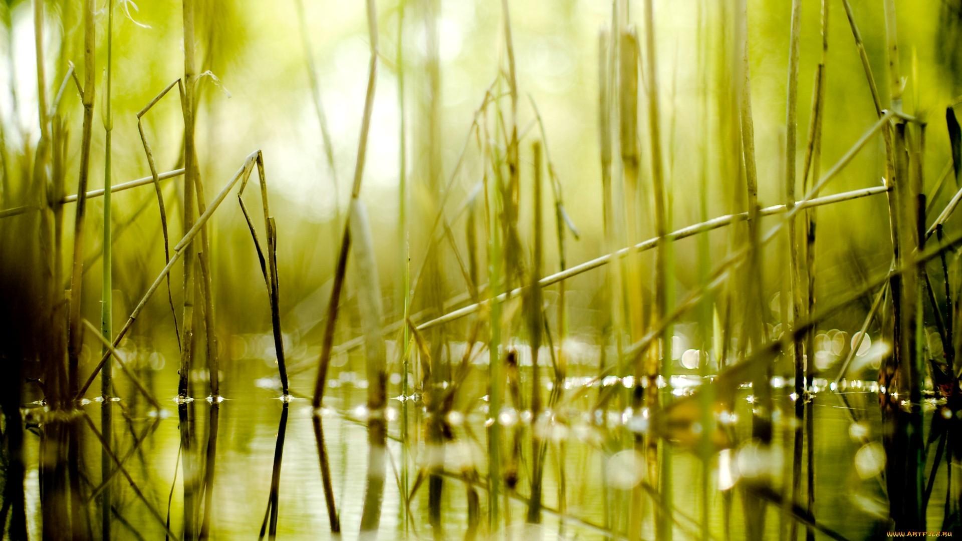 Seagrass HD Wallpaper