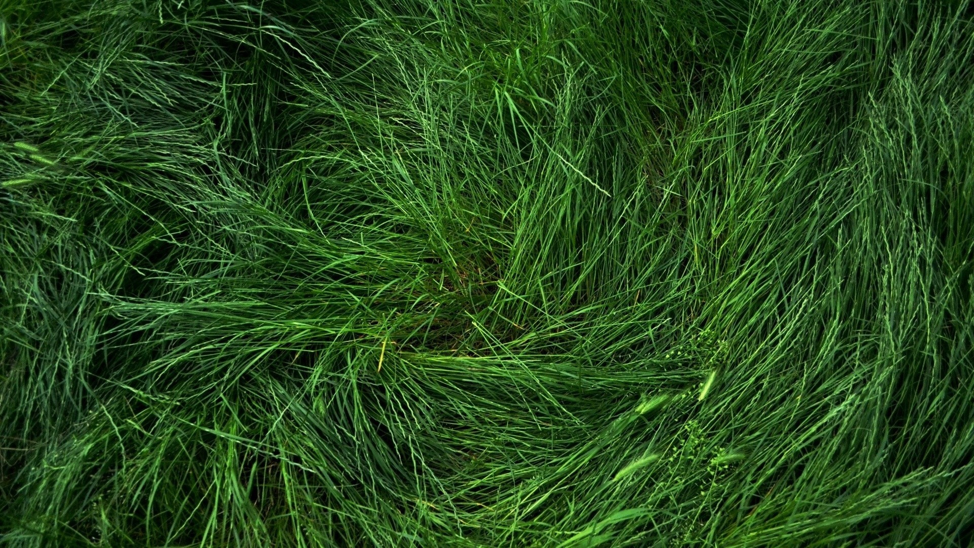 Seagrass Free Wallpaper