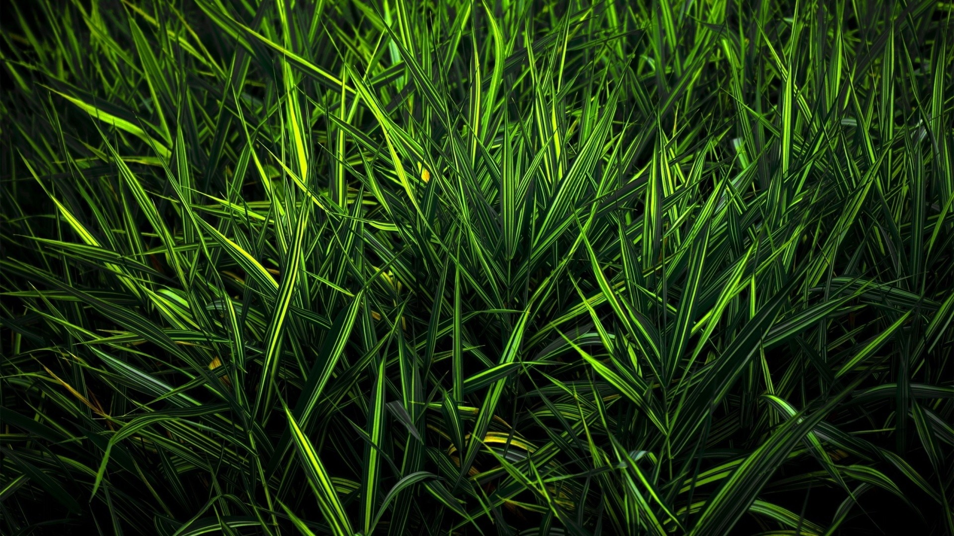 Seagrass hd desktop wallpaper