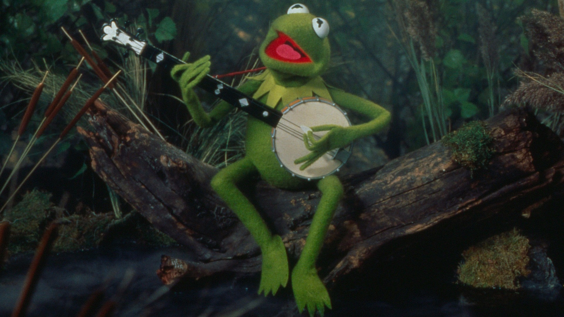 Hearts Kermit The Frog Free Wallpaper and Background