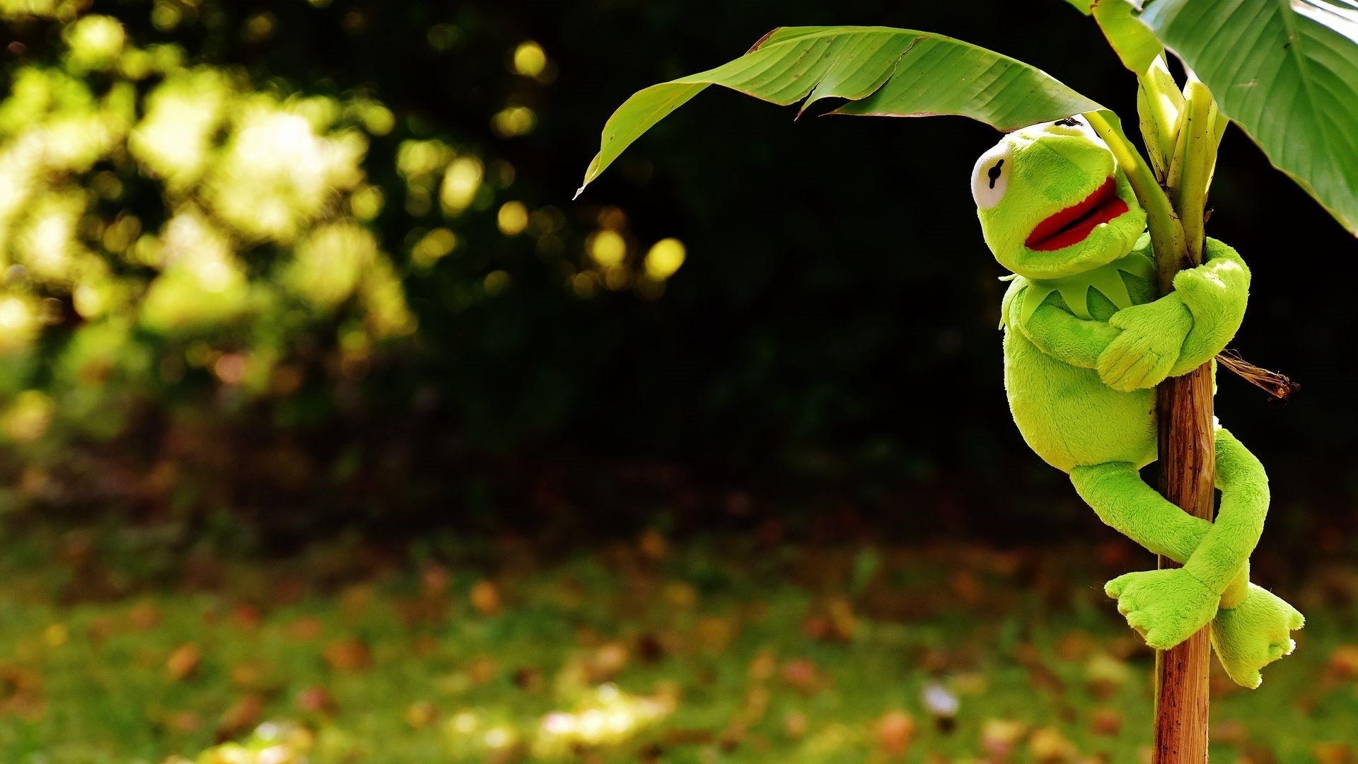 Hearts Kermit The Frog hd wallpaper download