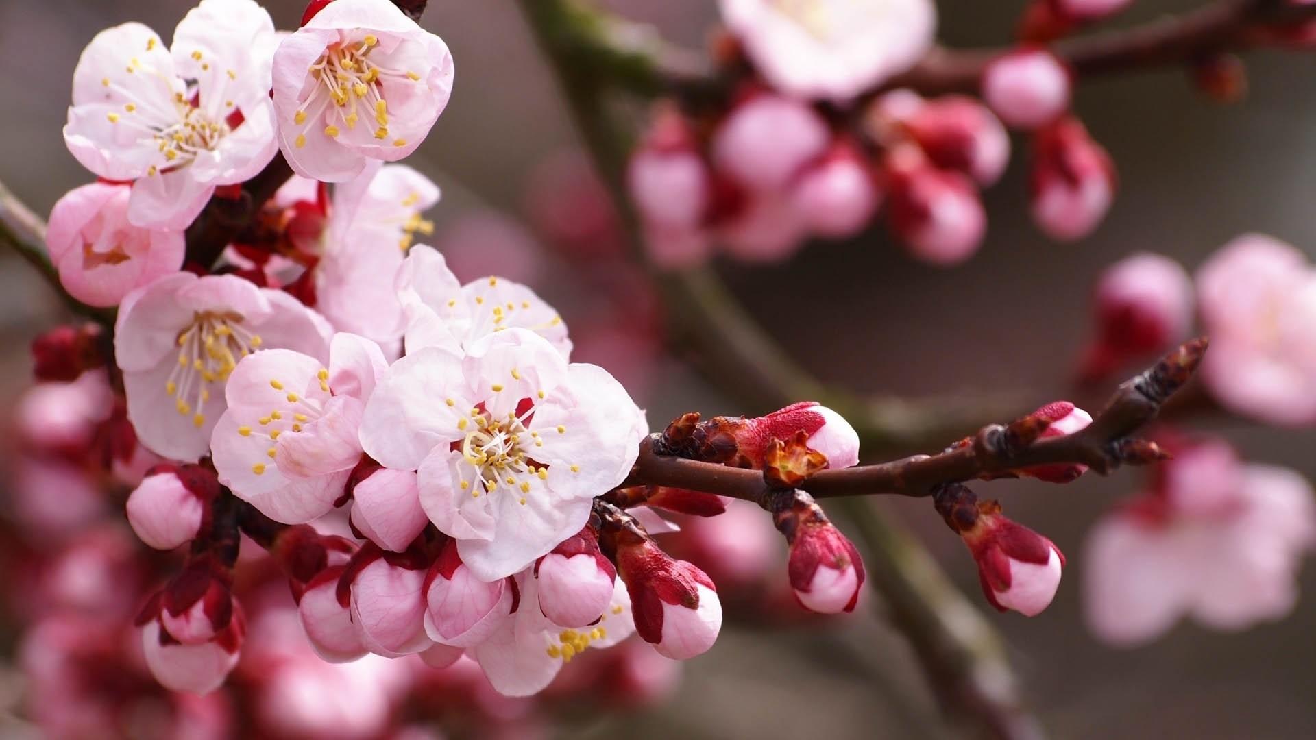 Spring High Quality