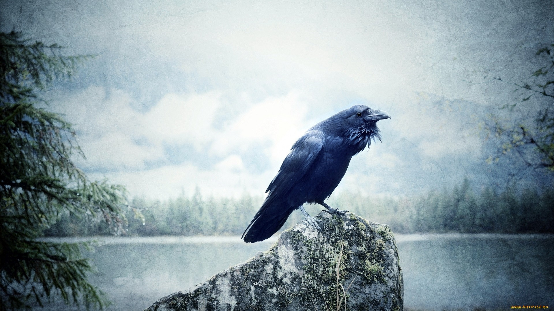 Raven computer wallpaper