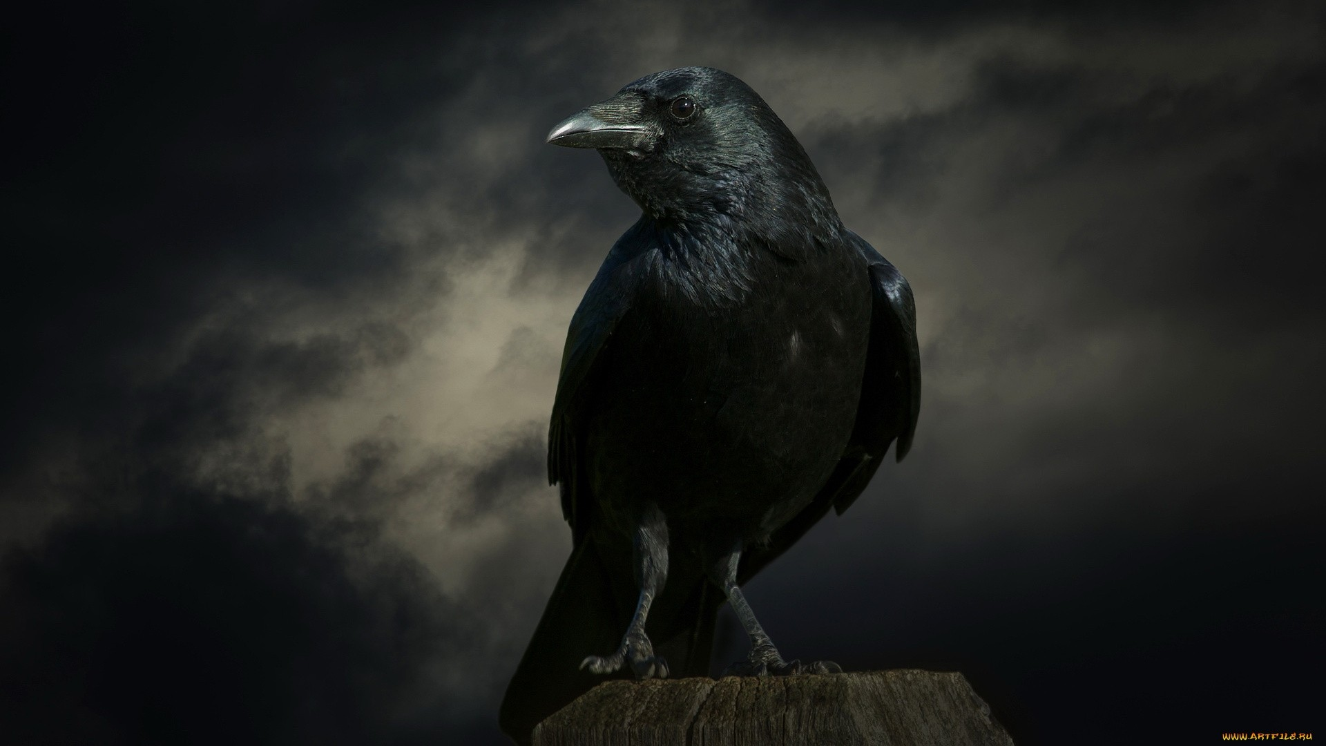 Raven Wallpaper and Background