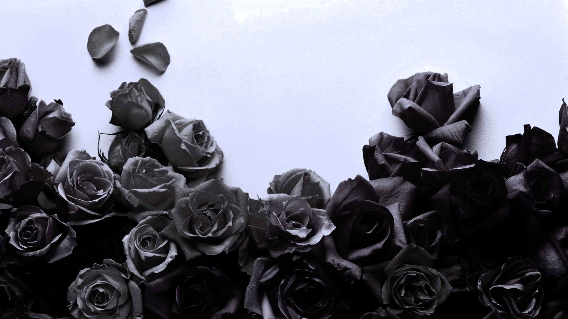 Dead Rose High Quality