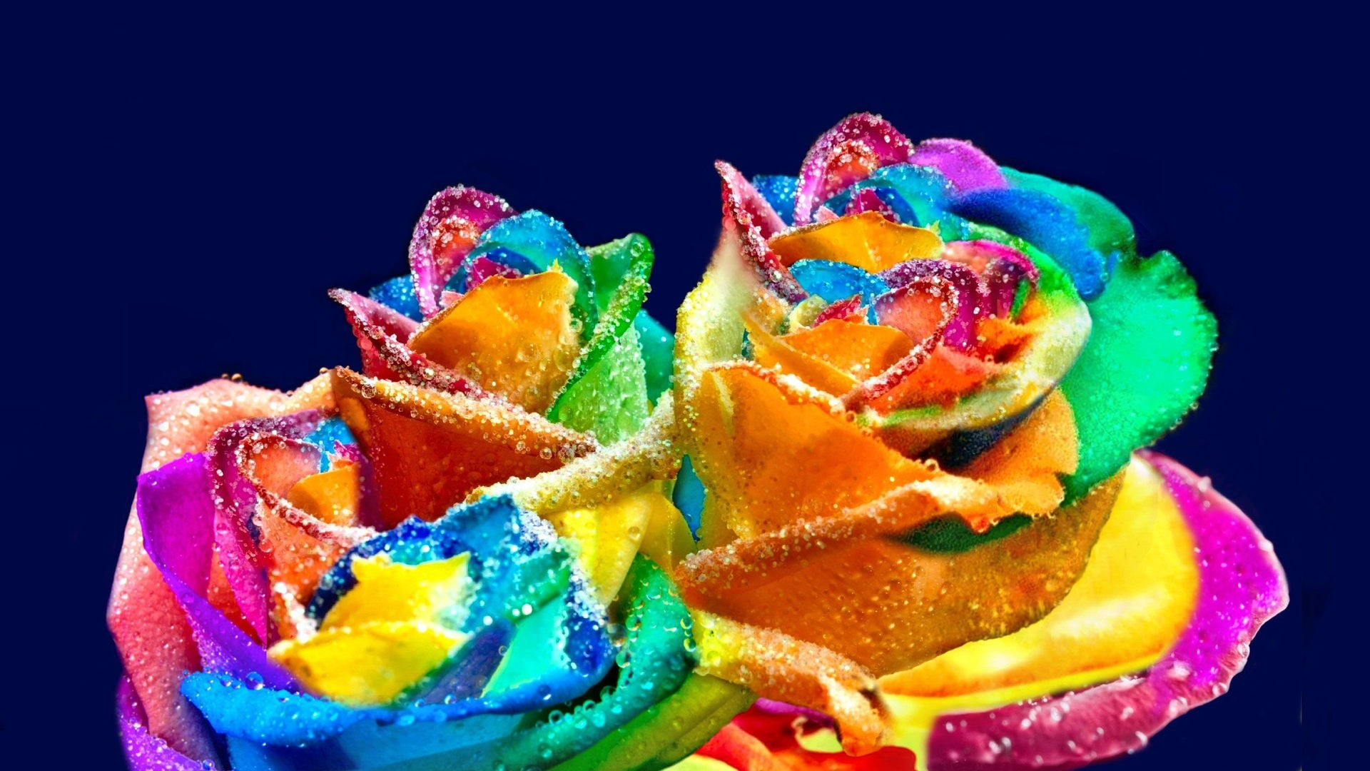 Rainbow Rose Free Wallpaper and Background