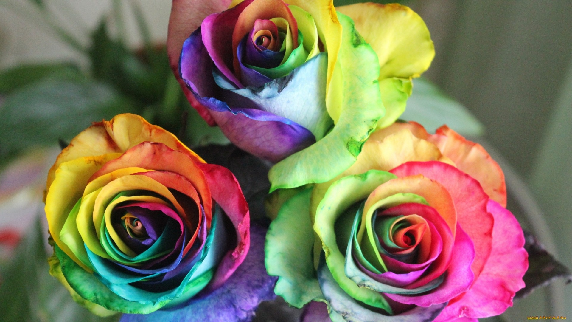 Rainbow Rose Wallpaper