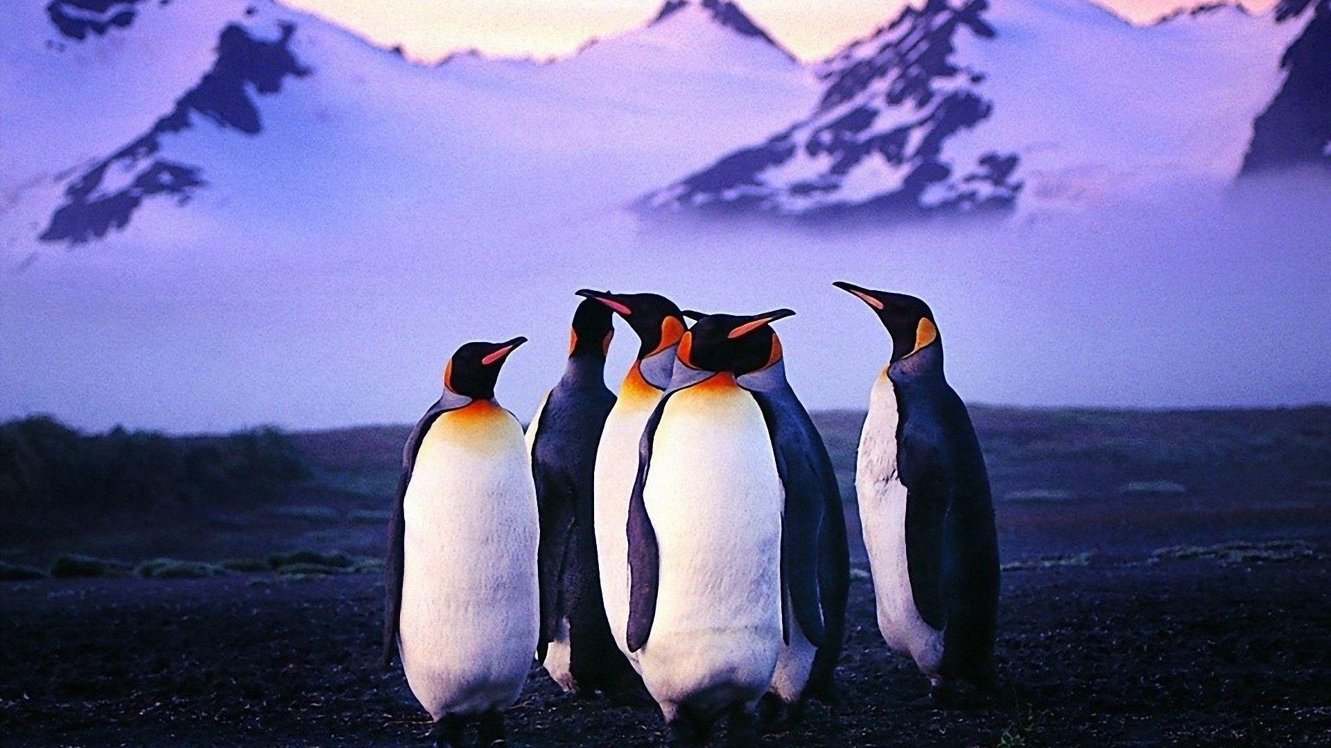 Penguin computer wallpaper