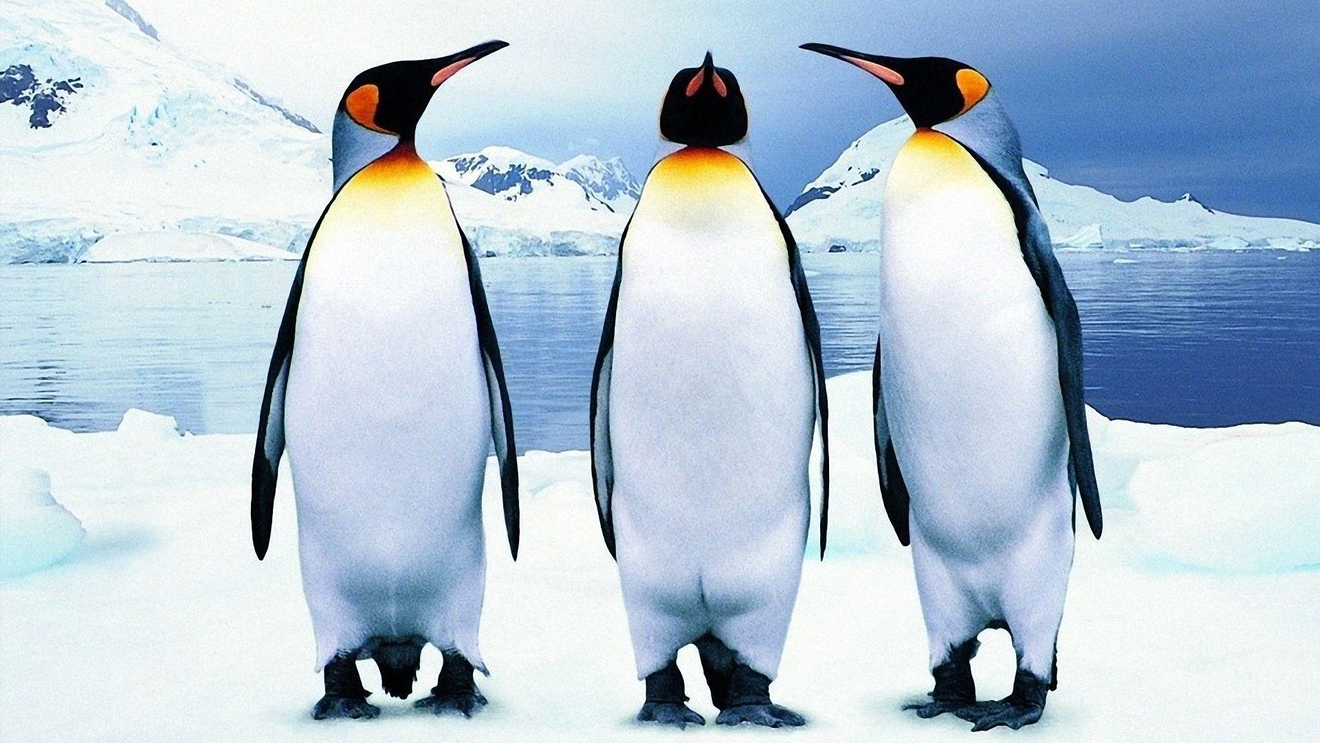 Penguin PC Wallpaper