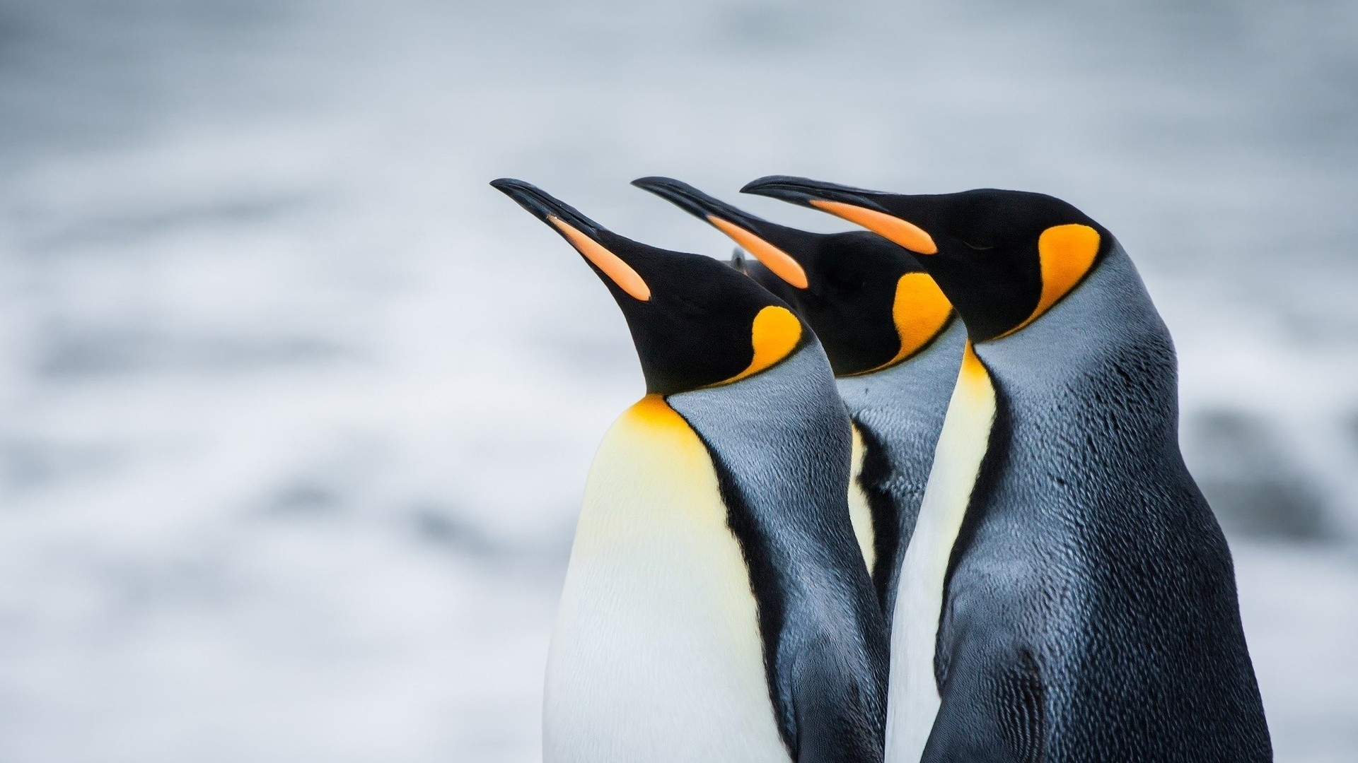 Penguin High Quality