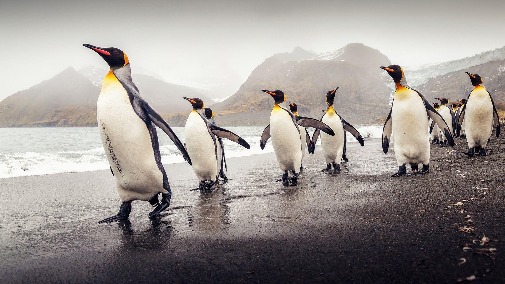 Penguin Download Wallpaper
