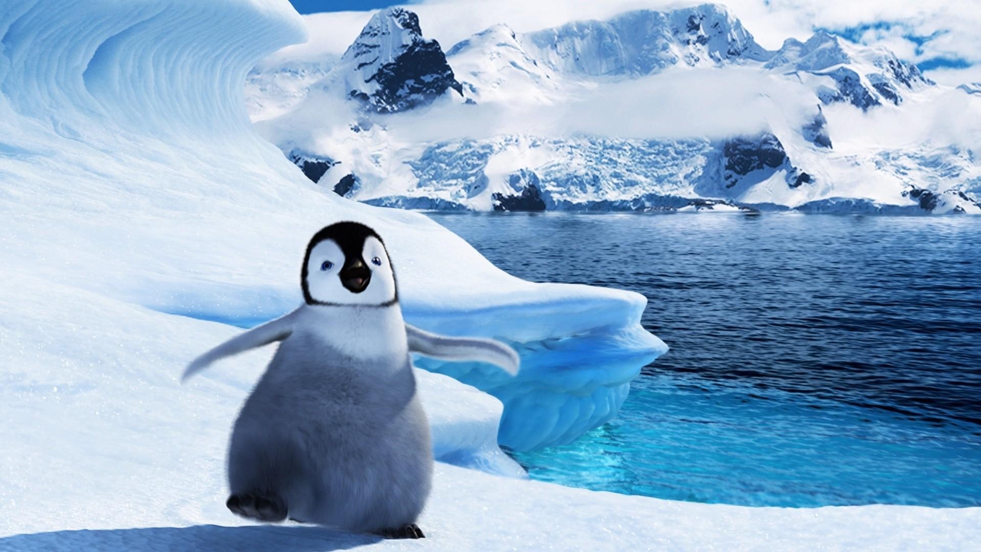 Penguin Full HD Wallpaper