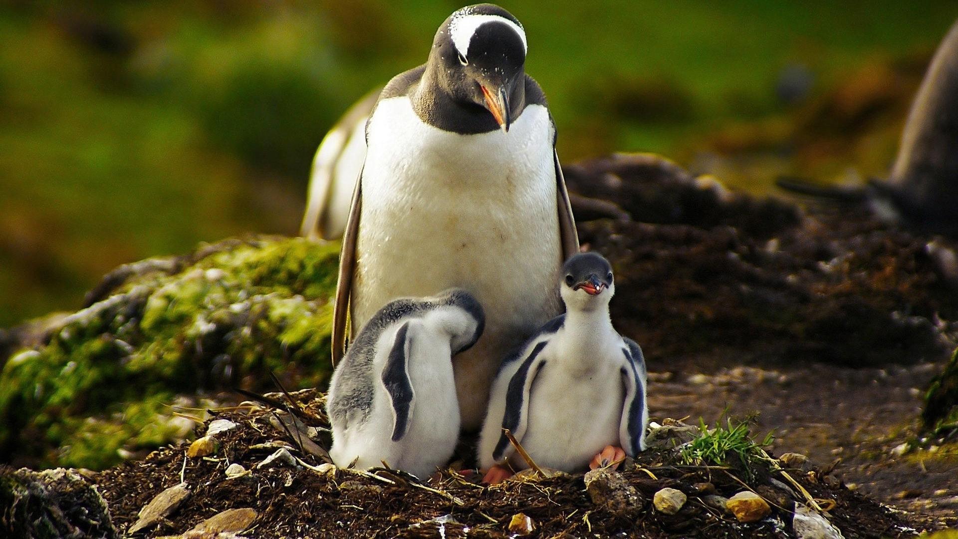 Penguin Pic
