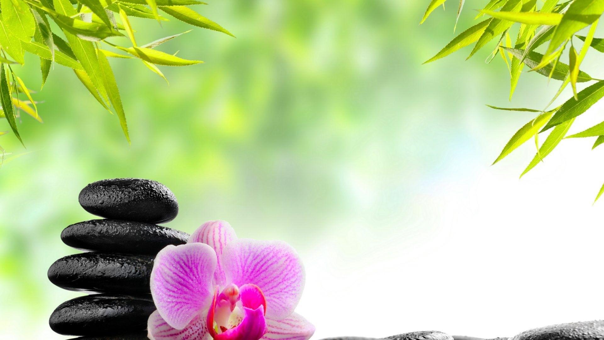 Zen Free Wallpaper