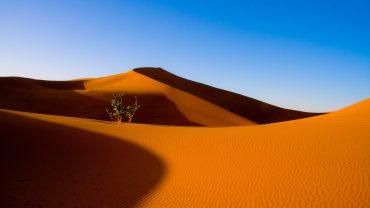 Desert Free Wallpaper
