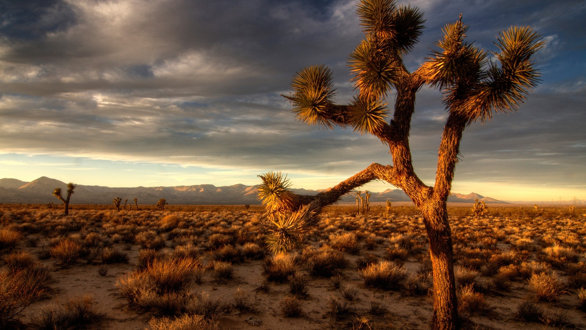 Desert Download Wallpaper
