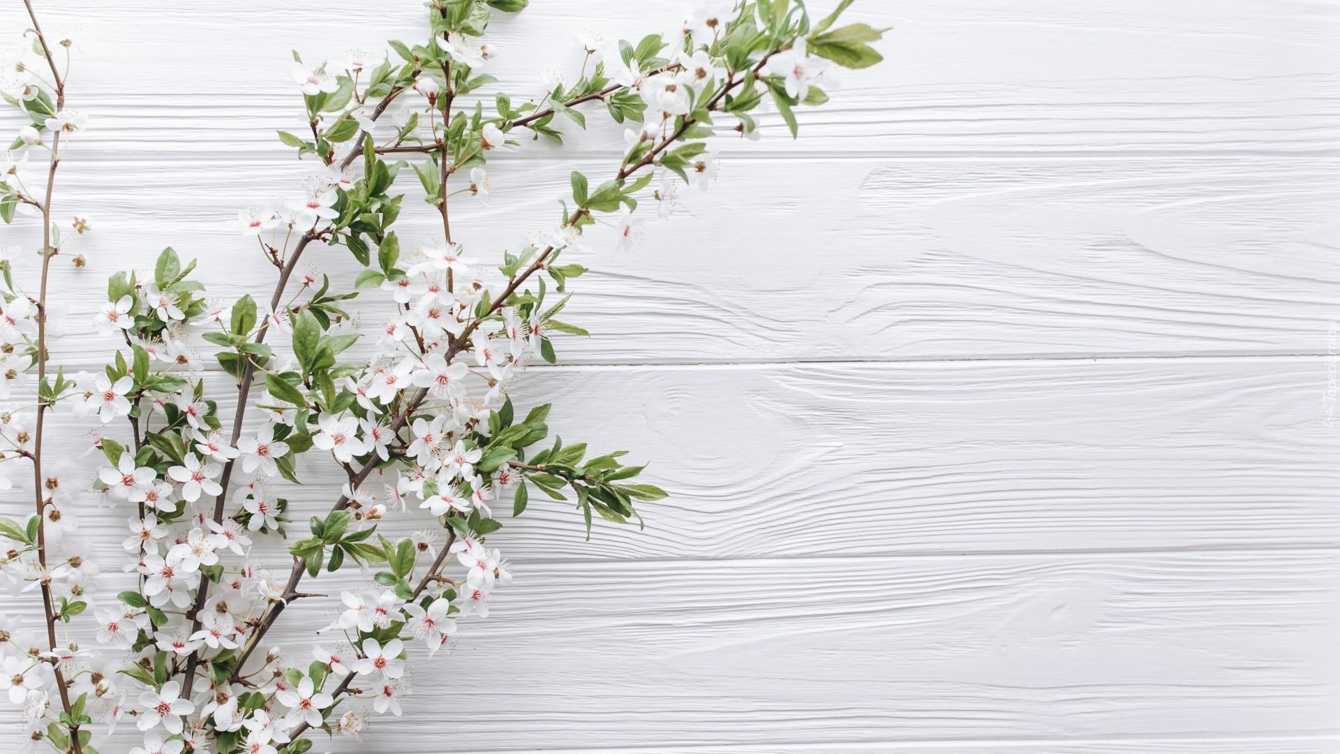 White Wood Free Wallpaper