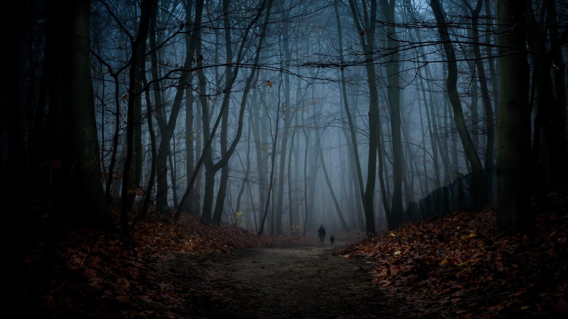 Dark Autumn Wallpaper image hd