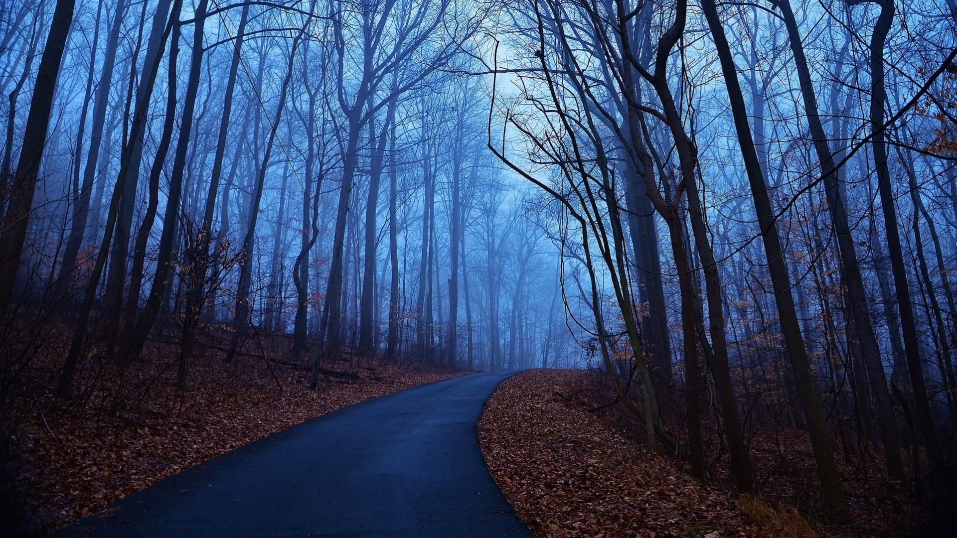 Dark Autumn Full HD Wallpaper