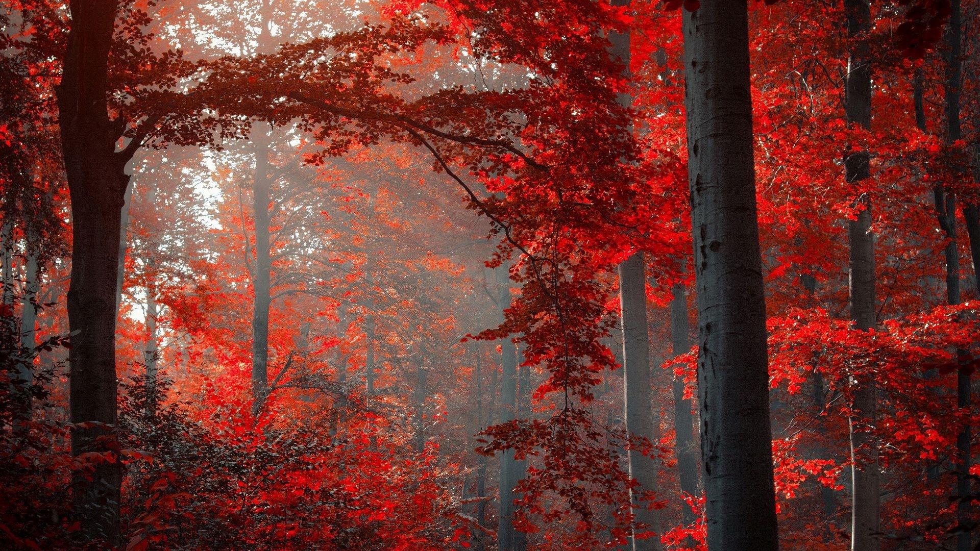 Dark Autumn Picture