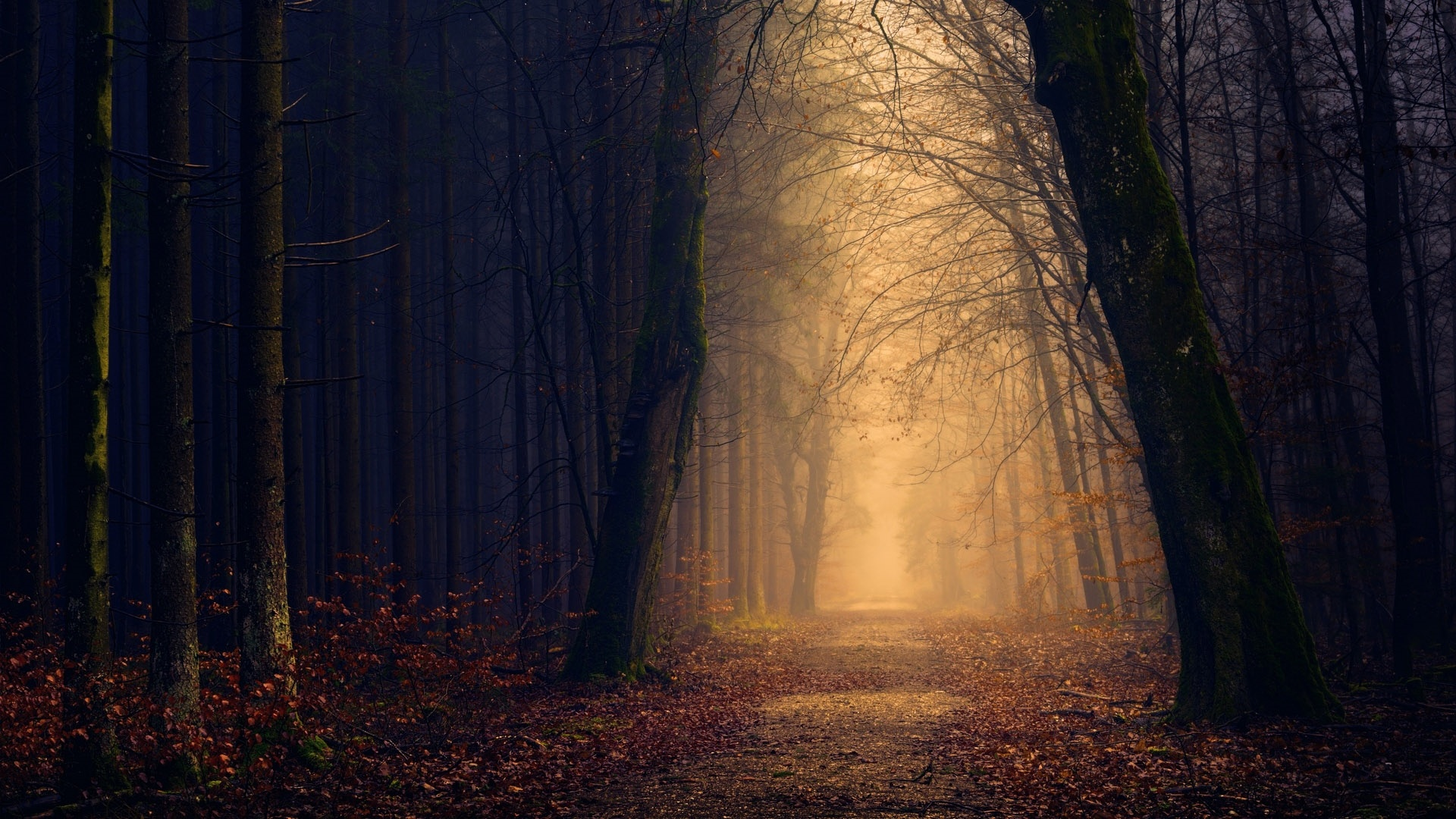 Dark Autumn Image