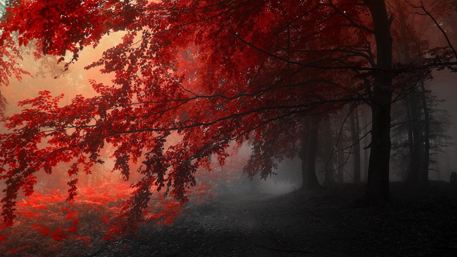Dark Autumn Wallpaper