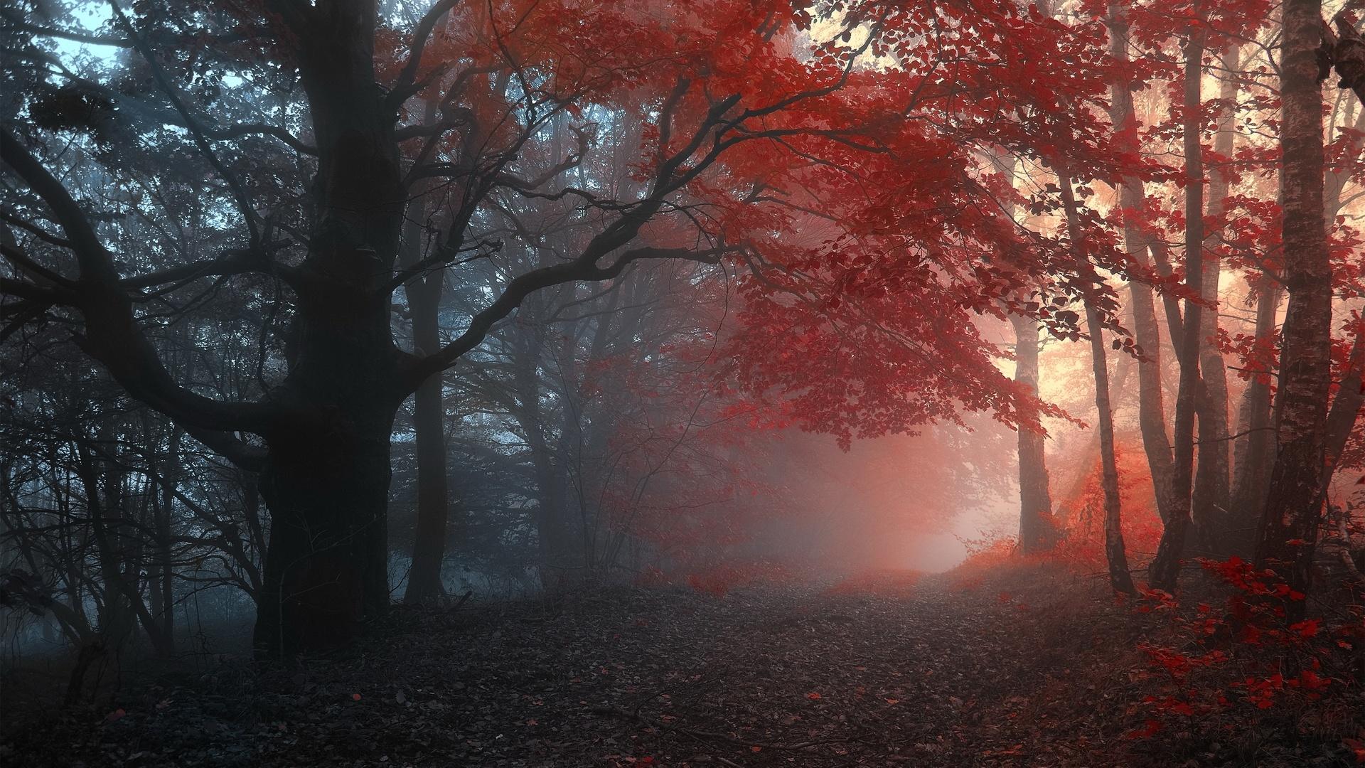 Dark Autumn PC Wallpaper HD