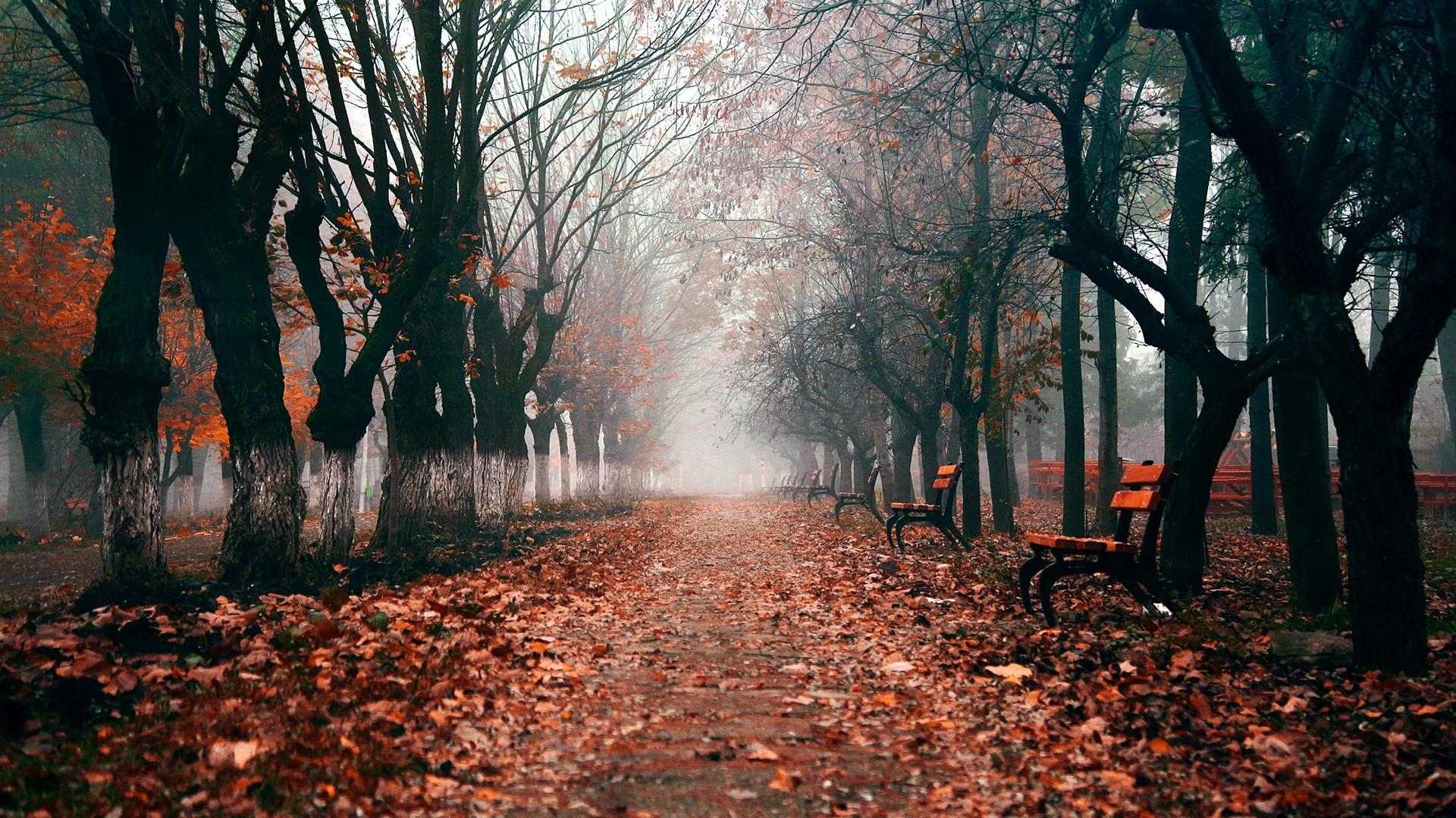 Dark Autumn hd wallpaper download