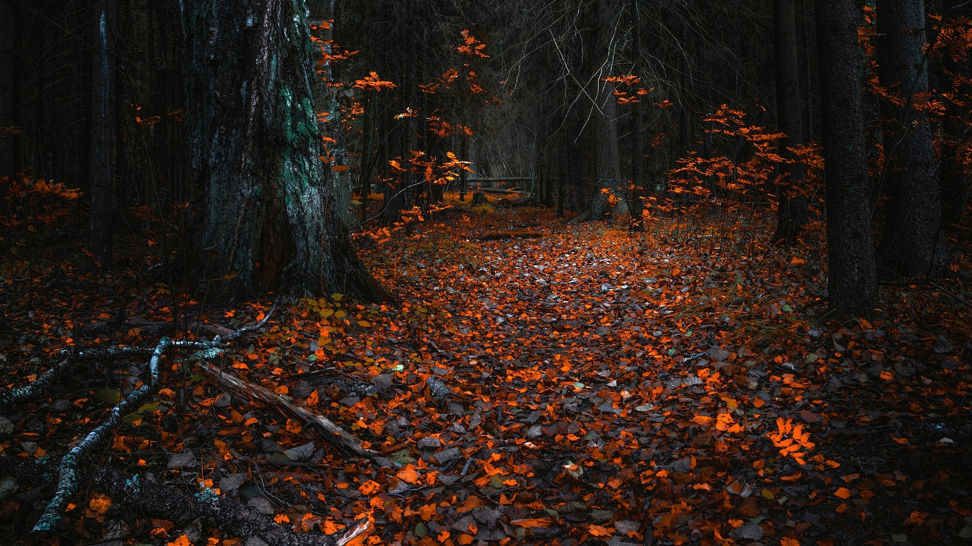Dark Autumn HD Wallpaper