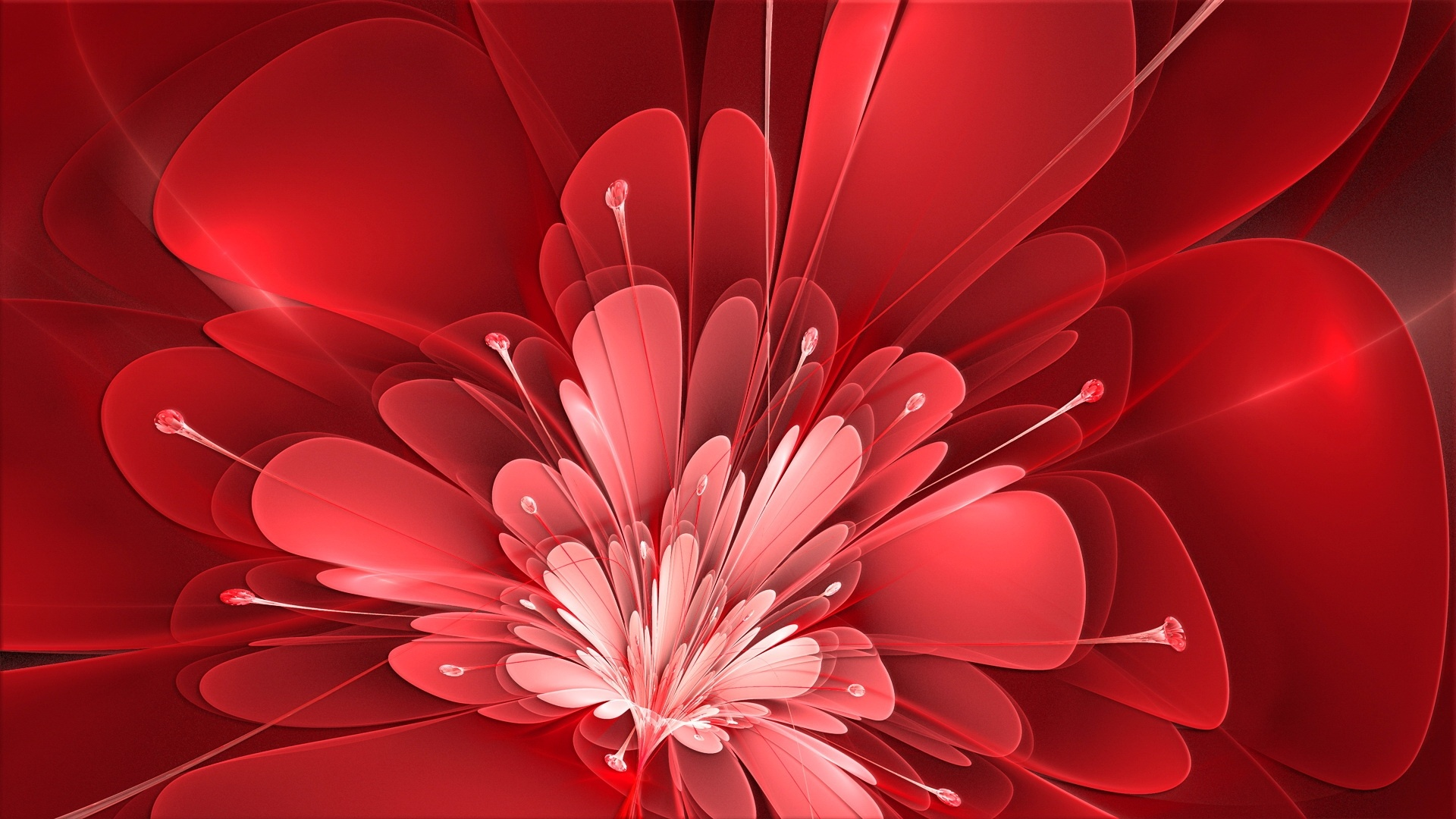 Red Flower Wallpaper and Background