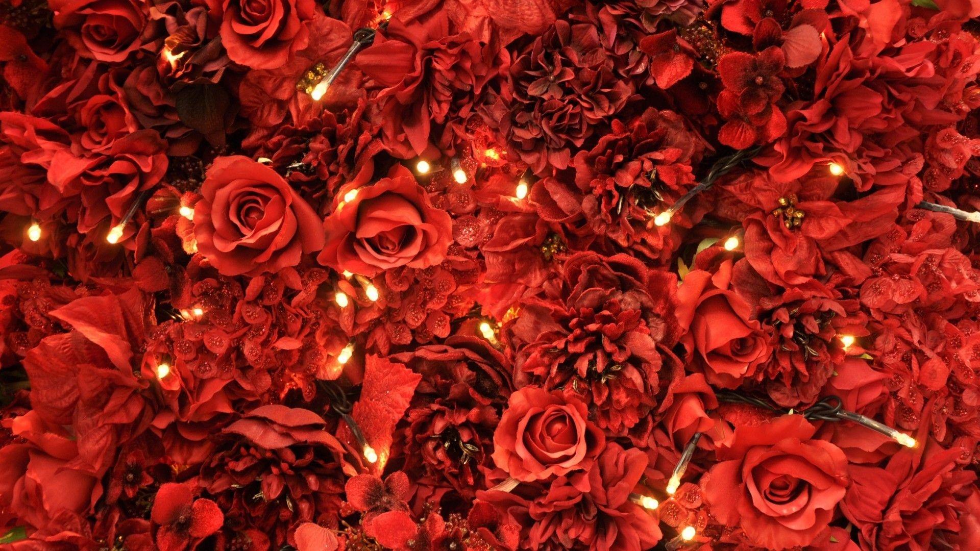 Red Flower Free Wallpaper