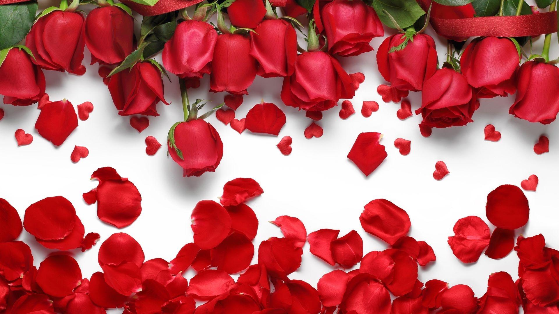 Red Flower Desktop Wallpaper
