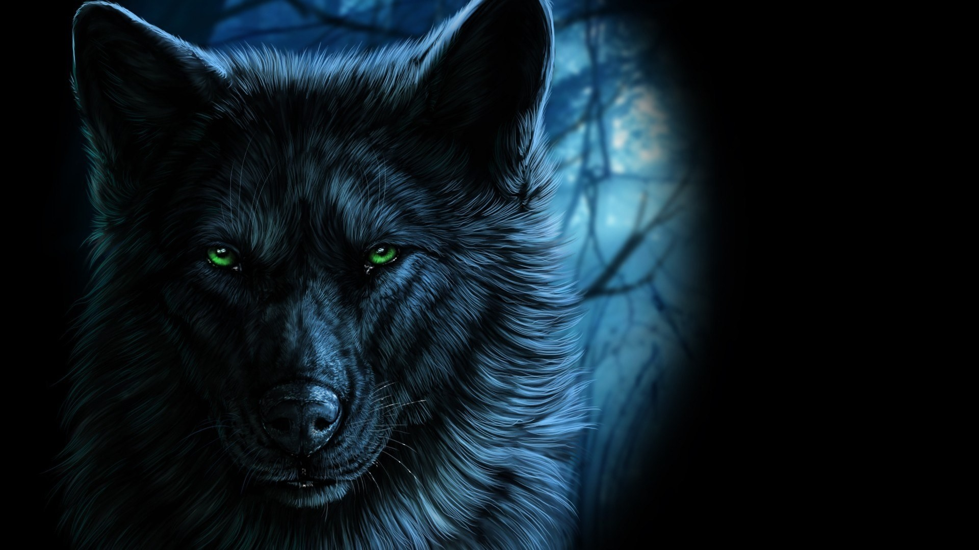 Black Wolf Wallpaper Picture hd