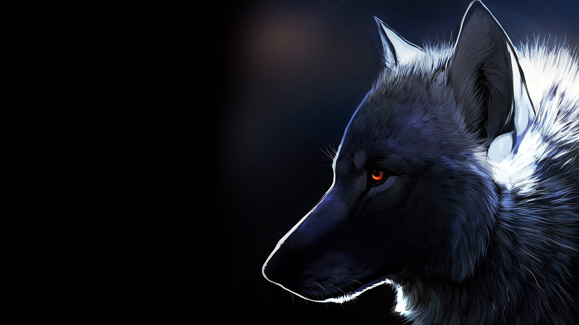 Black Wolf a wallpaper
