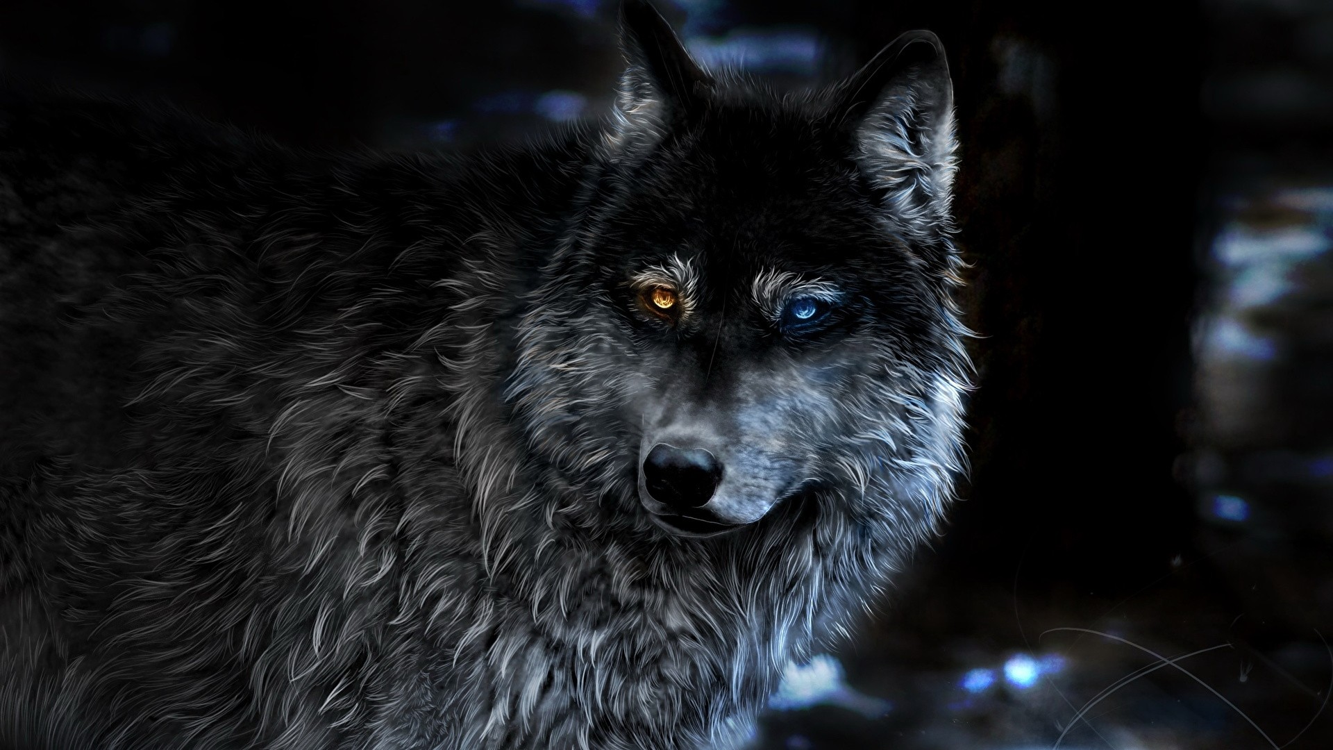 Black Wolf Free Wallpaper
