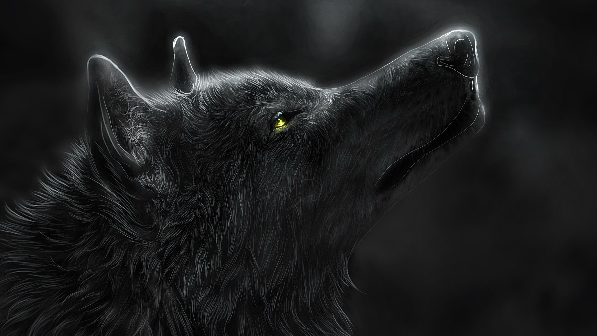 Black Wolf hd desktop wallpaper